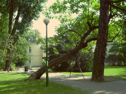 park_kombatantow_pochylone_drzewo_500.jpg