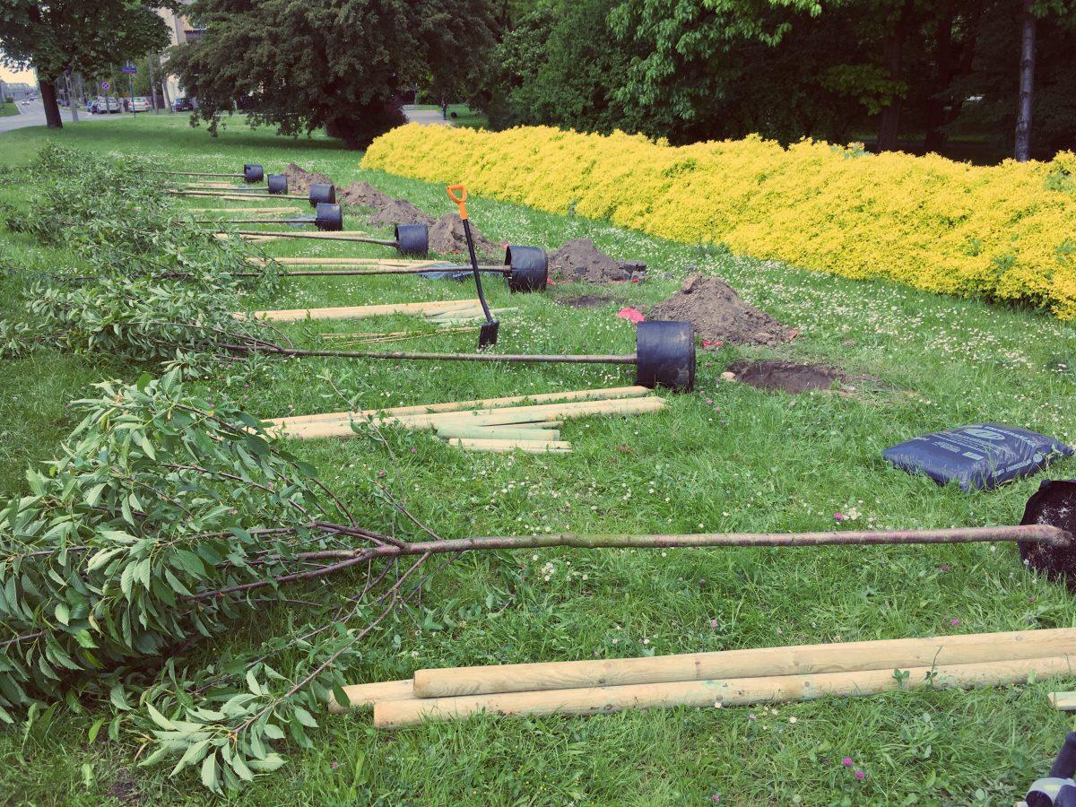 Sąsiedzi sadzą zieleń