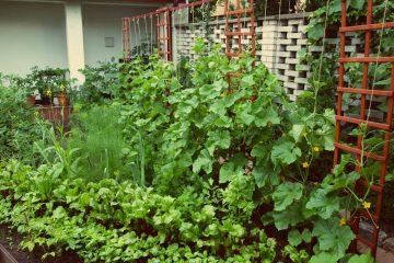 Sąsiedzkie porady ogrodnicze: Podwyższone grządki