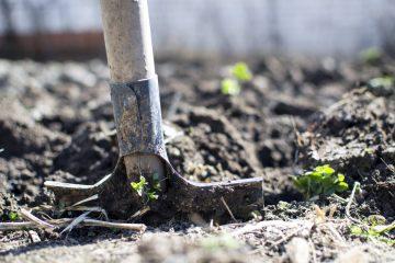 Łopata wbita w ziemię w ogrodzie