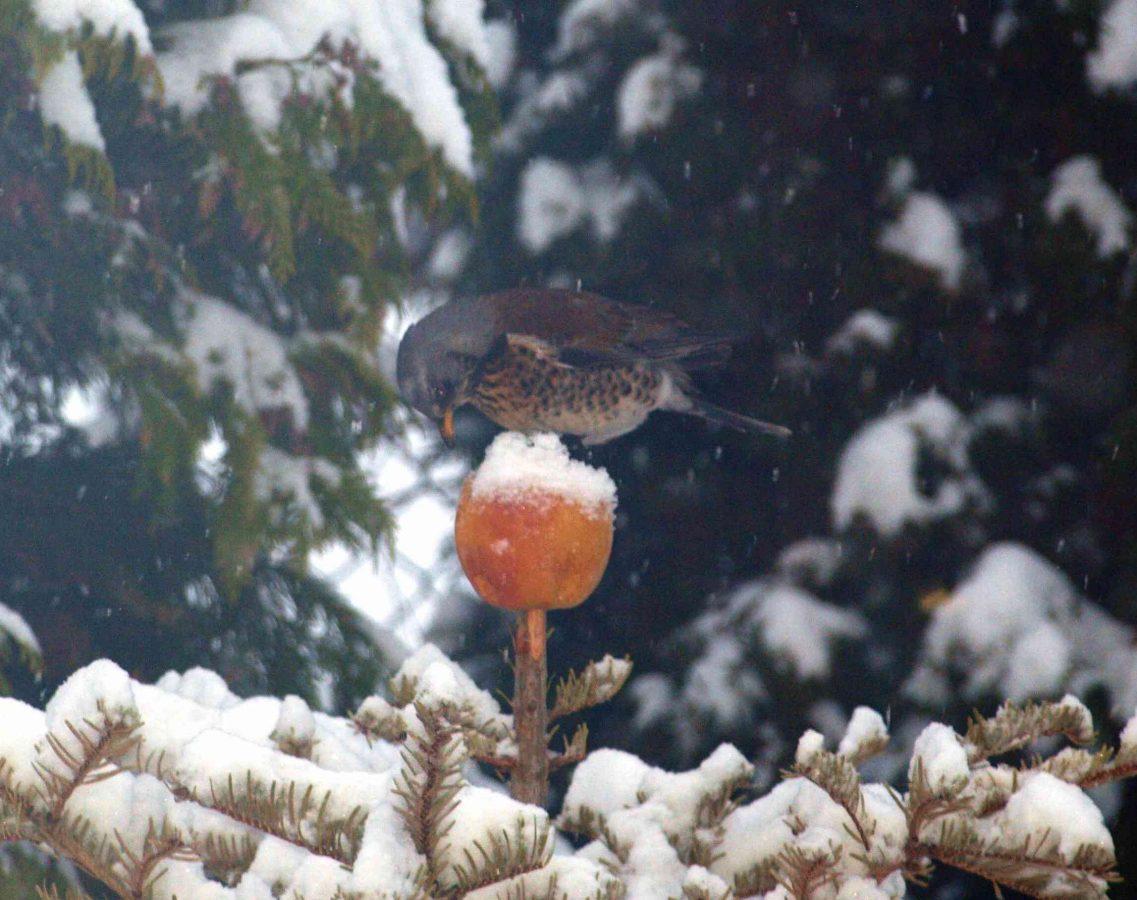 Sąsiedzkie porady ogrodnicze: Zaproś ptaki do swojego ogrodu