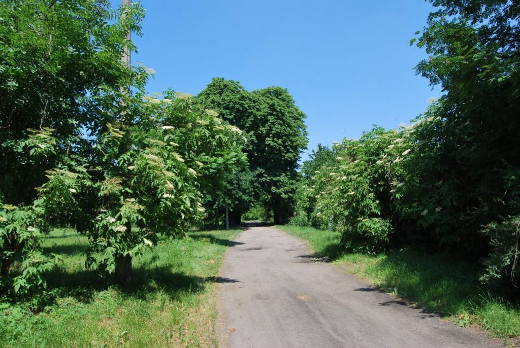 Widok na drogę gruntową biegnącą między drzewami i dawnymi ogródkami działkowymi na terenach Ogrodów Kosmosu