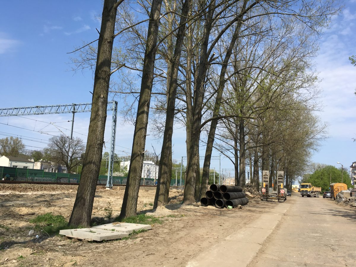 Czy drzewa wzdłuż ul. Tynkarskiej przetrwają?