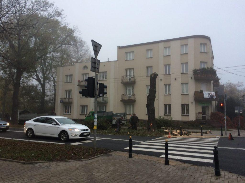 Wycinka starego drzewa na ul. Potrzebnej i Wałowickiej