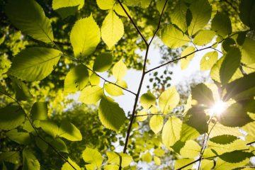 Nasadzenia nowych drzew we Włochach. Podsumowanie 2018 roku